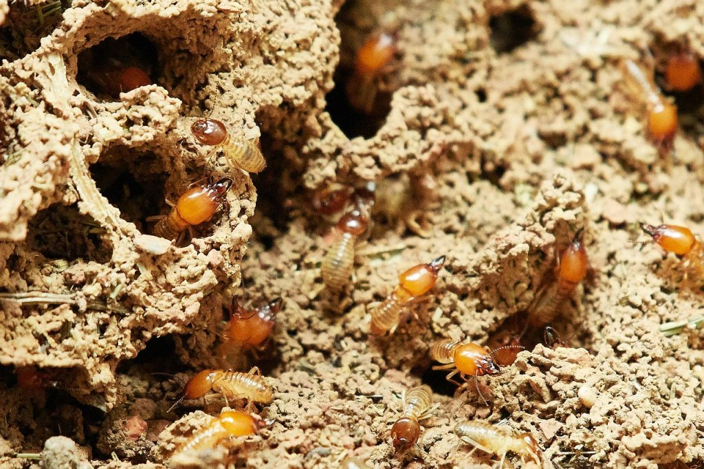termites in their holes and tunnels
